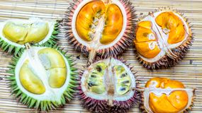 Different variety of durian fruit royalty free stock photo