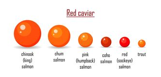 Different variety red caviar salmon isolated on white background. Roe icon vector illustration. Russian traditional. Snack. Classification any type caviare of stock illustration