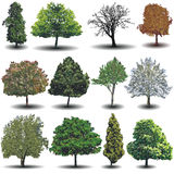 Different vector trees Royalty Free Stock Photos