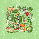 Different vegetables drawings Stock Images