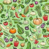 Different vegetables drawings Stock Image