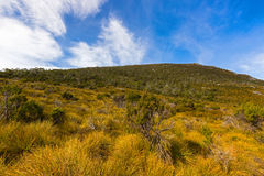 Different Vegetation covering the slopes of Mount Campbell, Cradle Mountain, Tasmania, Australia. Different Vegetation covering the slopes of Mount Campbell stock photography