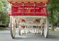 A Different View of the Budweiser Clydesdales royalty free stock images
