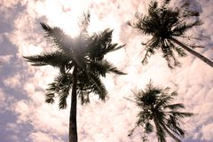 Palm trees in cloudy sky royalty free stock photography