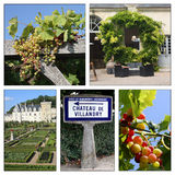 Different views of the Loire valley. Region, in a square composition Royalty Free Stock Photo
