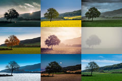 Different views of a tree Stock Image