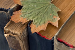 Different vintage, antiquarian, tattered books with dry leaf Stock Photos