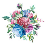 Different watercolor roses romantic collection. Watercolor romantic bouquet of red and blue peonies, roses and jasmine  on white background Royalty Free Stock Images