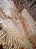 Different ways. Bark beetles ways in wood Stock Images