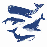 Different whales isolated on white. Four different whales vector silhouettes isolatedon white Stock Photos