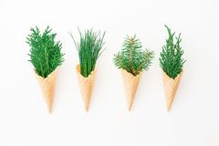 Different Winter tree in waffle cones on white background. Eco concept. Flat lay, top view Stock Photos