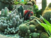 Differente del cactus, azienda agricola del cactus Immagini Stock