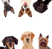 Differents dogs looking at camera stock image
