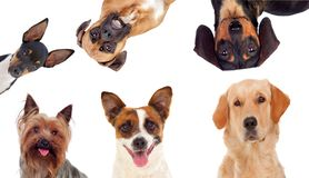 Differents dogs looking at camera stock images