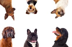 Differents dogs looking at camera royalty free stock photos