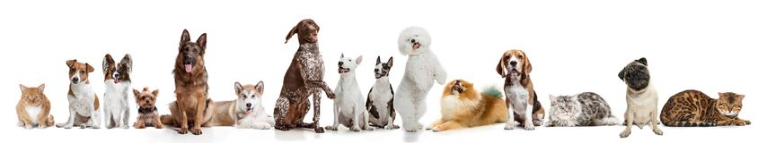 Differents dogs looking at camera isolated on a white background stock image