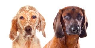 Differents hundkapplöpning som ser kameran Arkivfoto