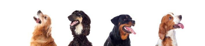 Differents hundkapplöpning som ser kameran Arkivbilder