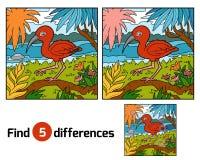 Differenze del ritrovamento, color scarlatto dell'ibis Immagine Stock Libera da Diritti