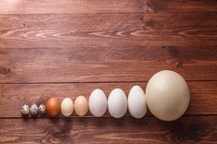 Differet size eggs from different birds Royalty Free Stock Photography
