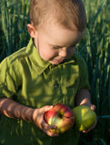 Difficult choice. Portrait of little boy with apples Royalty Free Stock Image