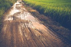 Difficult Road. Muddy road after rain in the rice field Royalty Free Stock Photography