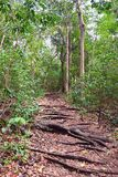 Difficuly Path - Walking Trail Through Tropical Forest with Roots of Trees on the Ground. This is a photograph of a walking trail through dense tropical forest royalty free stock photo