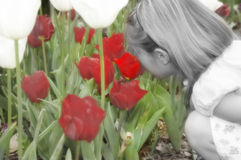 Diffrent. Little girl is in black and white while flowers are hand tinted to red and green. She smells the brightest and prettiest tulip of them all Royalty Free Stock Photography
