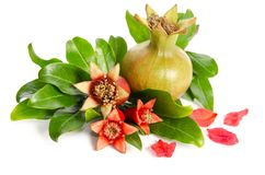 Diffrent pomegranates with leaves. On white background Stock Photography