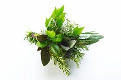 Différentes herbes Photos stock
