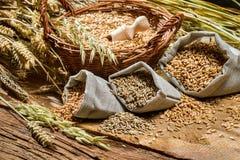 Différents types de grains de céréale avec des oreilles Photographie stock