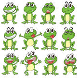 Différents visages d'une grenouille Photo stock