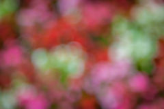 Diffused autumn colors bokeh Stock Photos