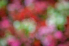 Diffused autumn colors bokeh Stock Photos