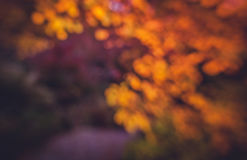 Diffused autumn colors Royalty Free Stock Image