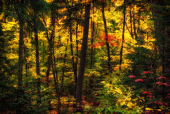 Diffused Autumn Forest. A beautiful mixed forest in autumn set aglow in diffused sunlight, displaying a multitude of colours royalty free stock photos