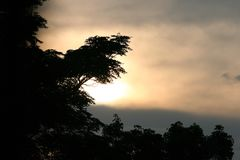 DIFFUSED GLOWING SUNLIGHT AT SUNSET WITH FOLIAGE OF A TREE. Image of the diffused golden glow of the rising sun with foliage in the foreground in silhouette stock photo