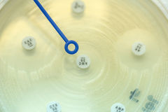 Diffusion method test for gram negative bacilli;  focus on all a Royalty Free Stock Photos