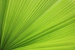 Diffusione dei fogli di verde. Fotografie Stock