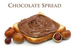 Diffusione del cioccolato e noci della nocciola Fotografia Stock Libera da Diritti