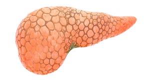 Diffusione sul pancreas, di malattia animazione 3d rappresentazione 3D isolata su fondo bianco royalty illustrazione gratis