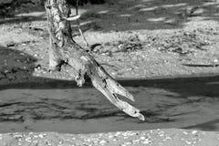 Diftwoodwassen omhoog op het strand Stock Foto