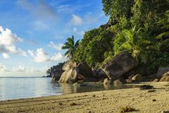 Dig at a beautiful paradise beach on the seychelles 2. Golden sand, granite rocks, a dog and palm trees at a beautiful idyllic paradise beach on the seychelles Royalty Free Stock Photo
