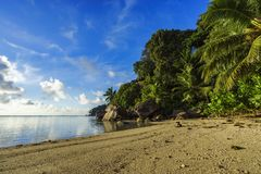 Dig at a beautiful paradise beach on the seychelles 3. Golden sand, granite rocks, a dog and palm trees at a beautiful idyllic paradise beach on the seychelles Royalty Free Stock Image