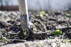 Dig garden. Detailed view from low position royalty free stock images