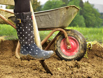 Dig in the garden. Photo shows a close up of a rubber boot digging in the garden - how to create a new garden bed Royalty Free Stock Photo