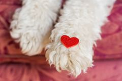 Dig paws heart. Fluffy dog paws with heart shape stock image