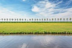 Diga con una fila degli alberi nel ploder di Beemster Fotografia Stock
