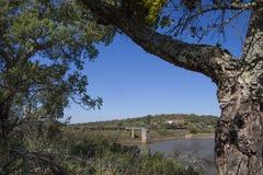 Diga del bacino idrico di Cornalvo dalla foresta, Estremadura, Spagna Fotografia Stock