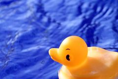 Diga el pato Imágenes de archivo libres de regalías
